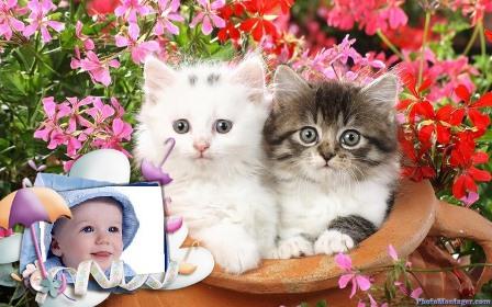 two kittens in flowerpot