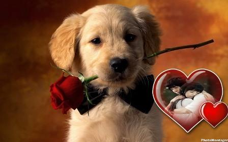 lindo fotomontaje con cachorro