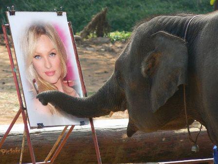 Fotomontajes de elefantes