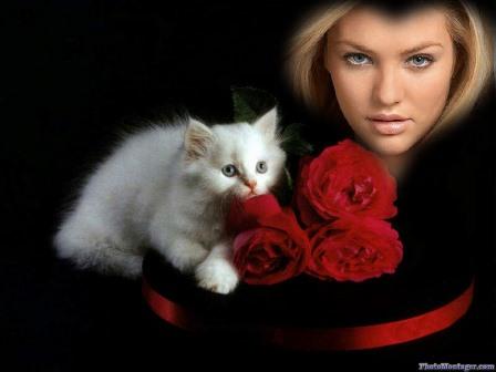 fotomontajes de gatos gratis