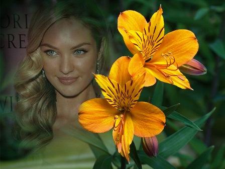 Fotomontajes con bellas flores amarillas