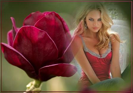 Fotomontajes con una hermosa rosa