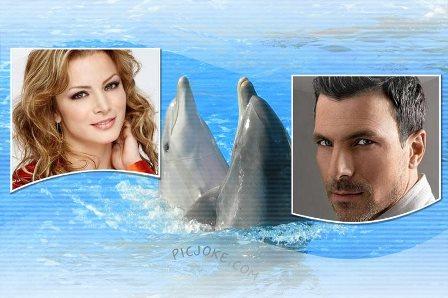 Fotomontajes con adorables delfines