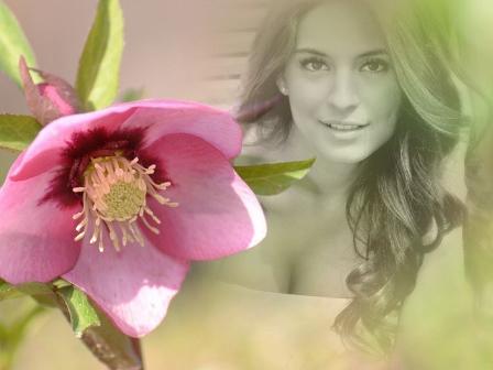 Fotomontajes con una flor color rosa