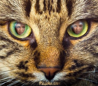Fotomontajes en los ojos de un gato
