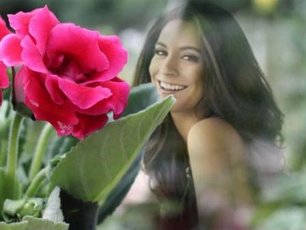 Fotomontajes en una  hermosa rosa