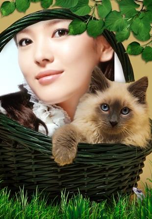Fotomontaje gratis con un tierno gatito